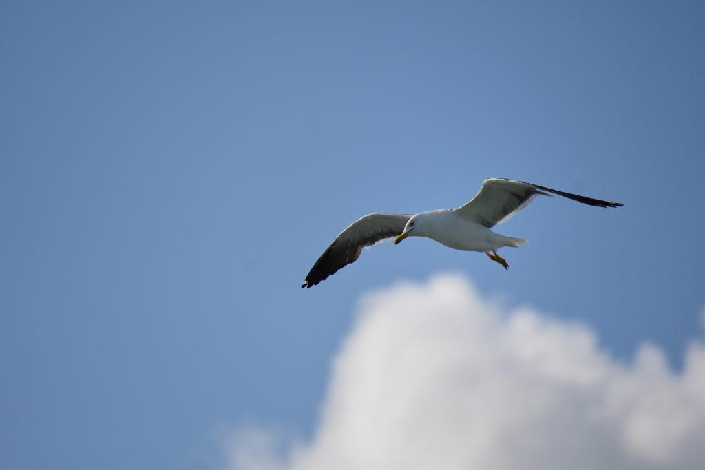 シリヤセレナーデに併走する鳥